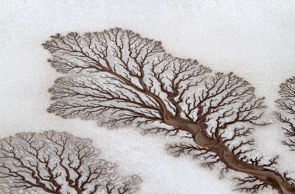 Древовидная река на полуострове Баха Калифорния в Мексике