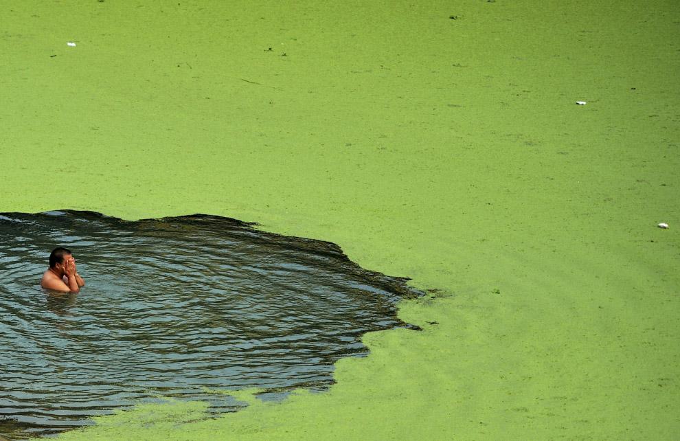 Река Хан, покрытая водорослями в провинции Хубэй, Китай