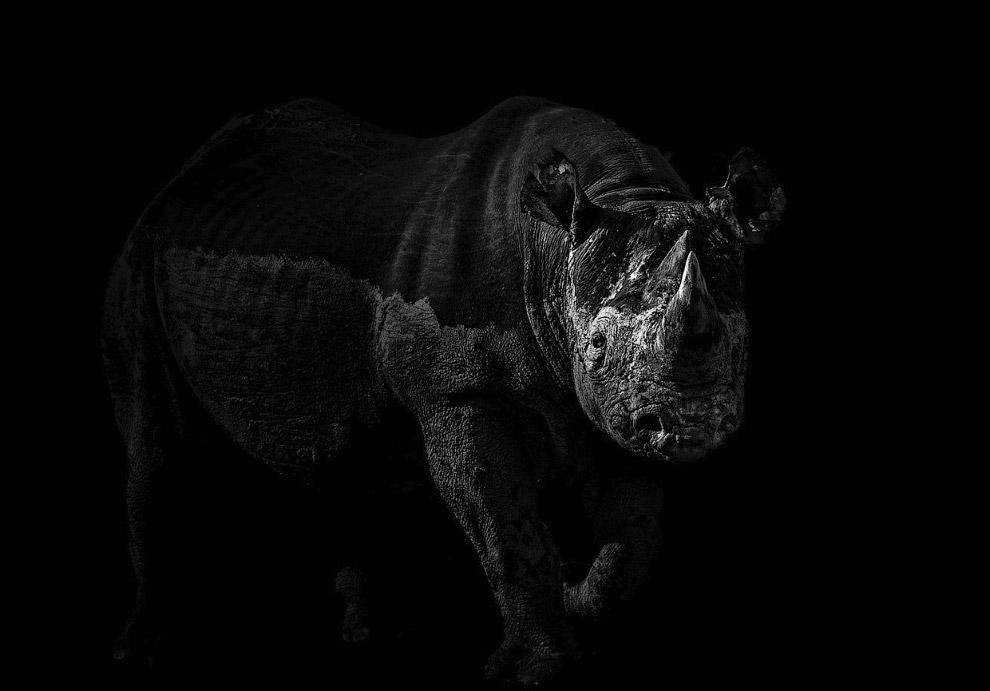 Черный носорог, Намибия