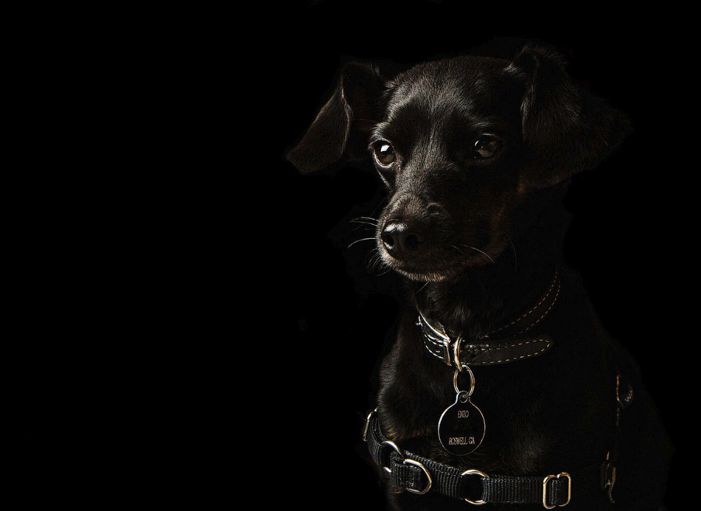 Собака автора снимков по имени Энцо