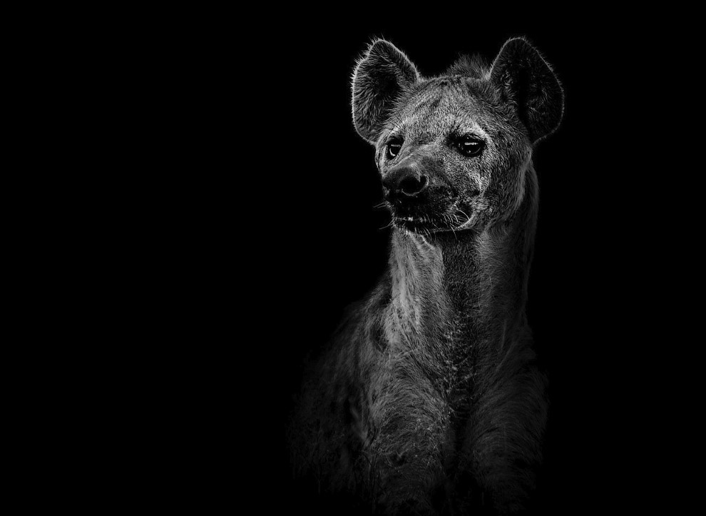 Портрет гиены
