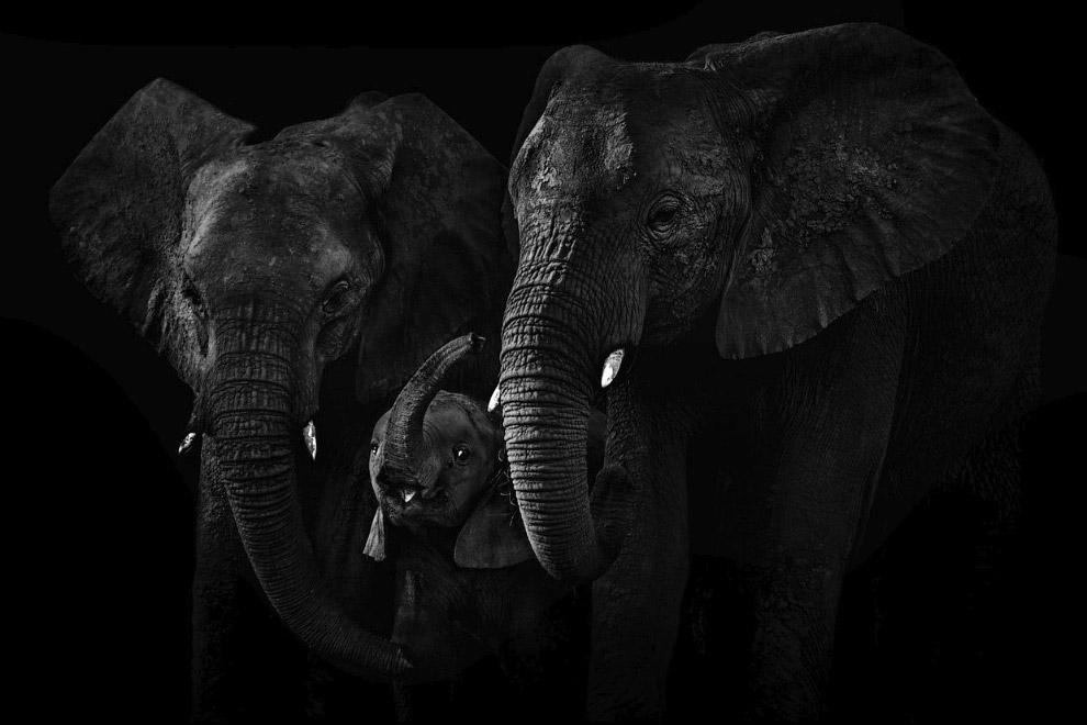 Семья слонов. Дельта Окаванго, Ботсвана