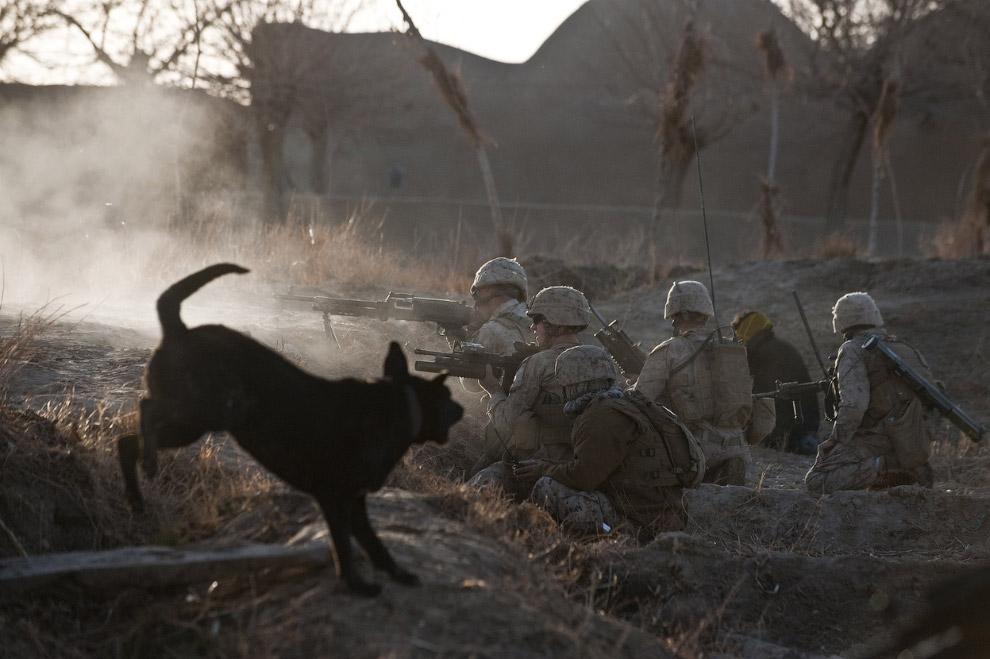 Бой с талибами, провинция Гильменд