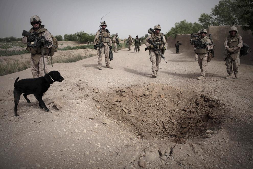 А взрывчатое вещество на дороге нашла эта собака-сапер, провинция Гильменд