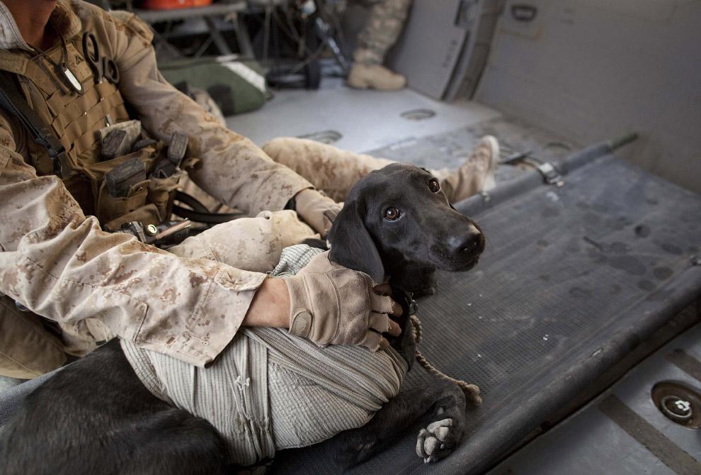 Найденный на поле боя и спасенный собакой раненый солдат