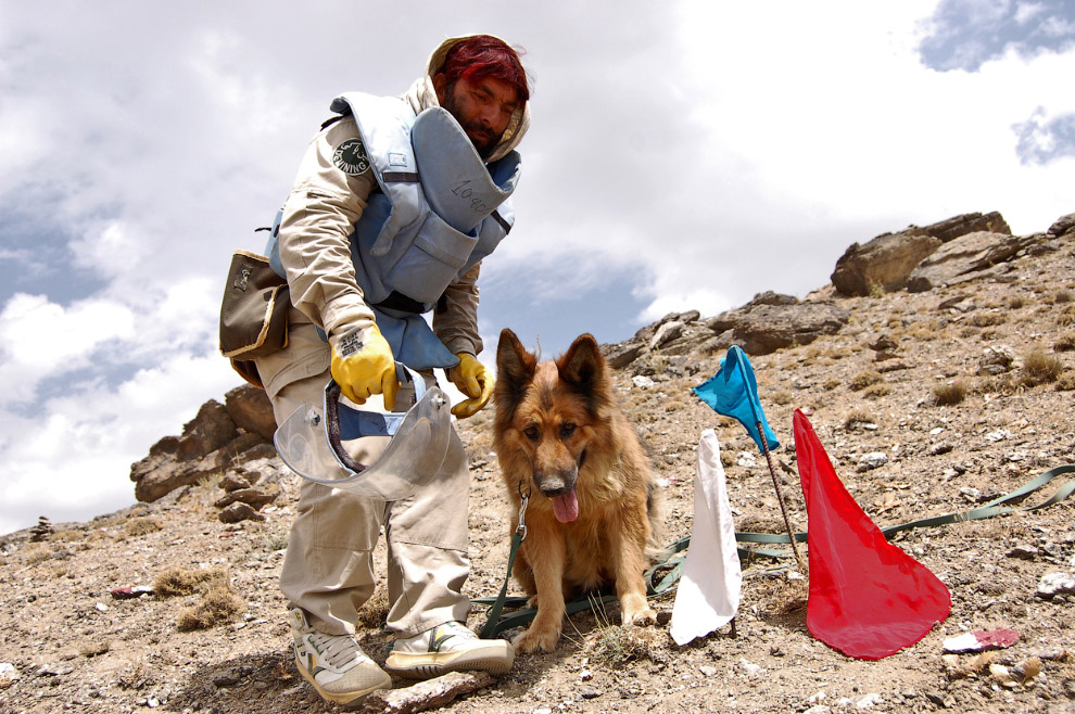 Собака-сапер на окраине Кабула