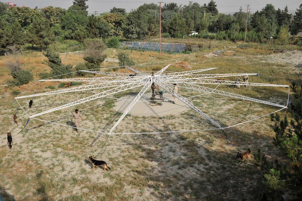 Центр, где собаки тренируются обнаружать мины