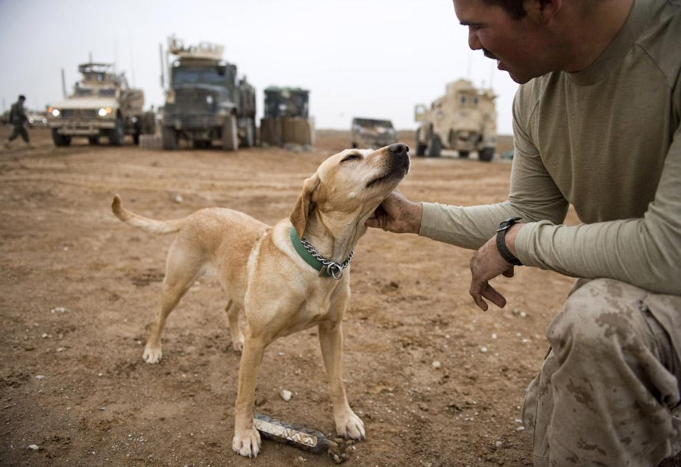 Каждая специально обученная, армейская собака может стоить более 70 000 долларов
