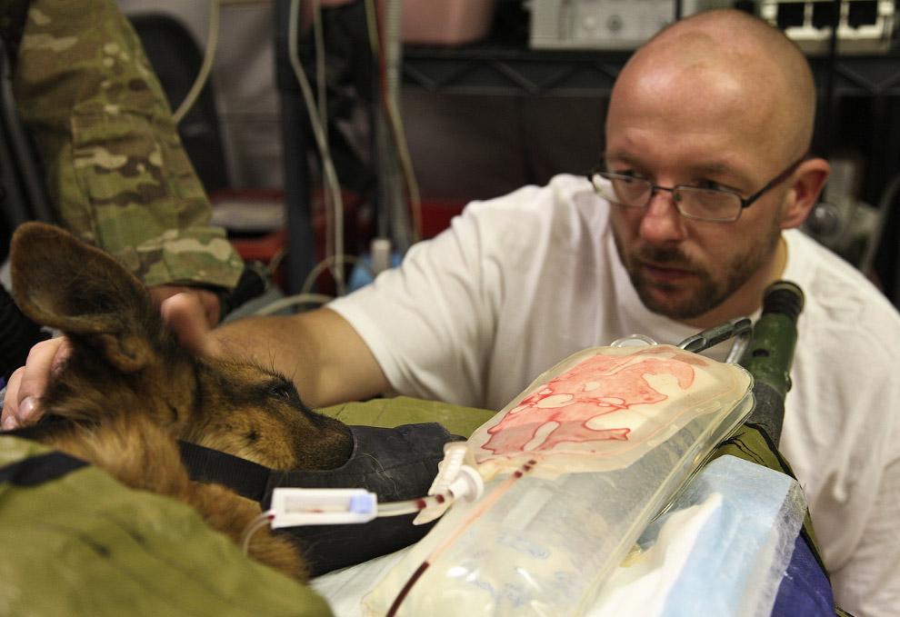 Раненая на поле боя собака