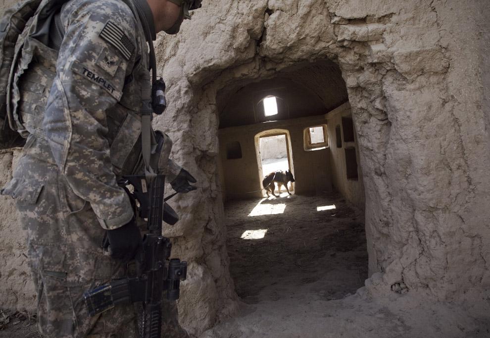 Собака-сапер ищет мину в провинции Кандагар