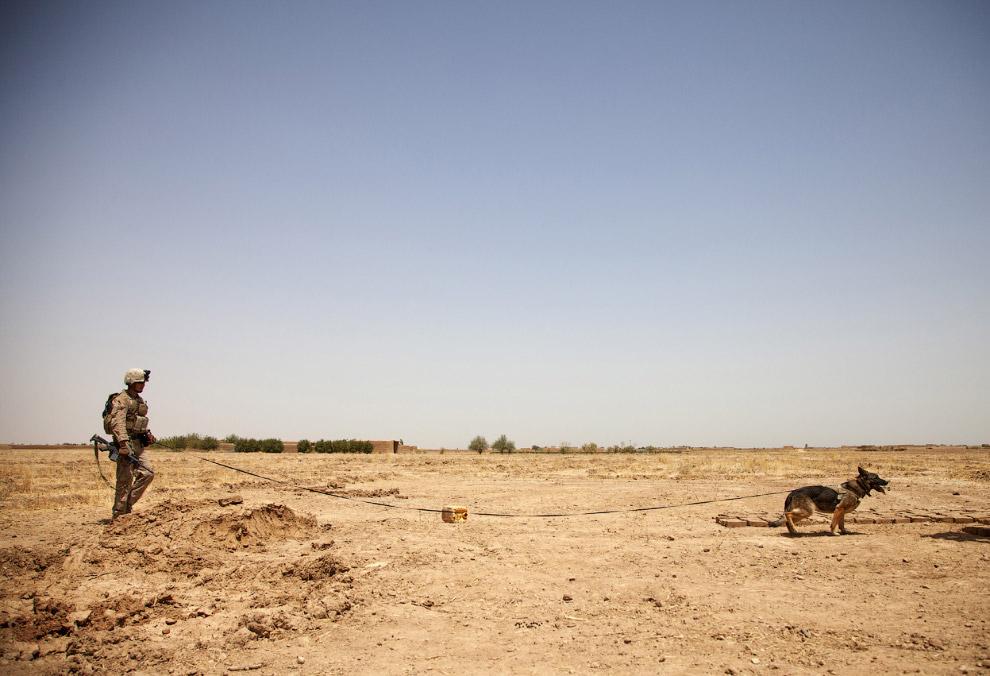 Двуногий и четвероногий саперы в провинции Гильменд