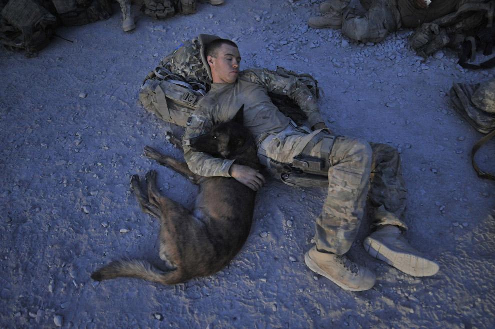 Это собака обучена патрулированию и поиску людей