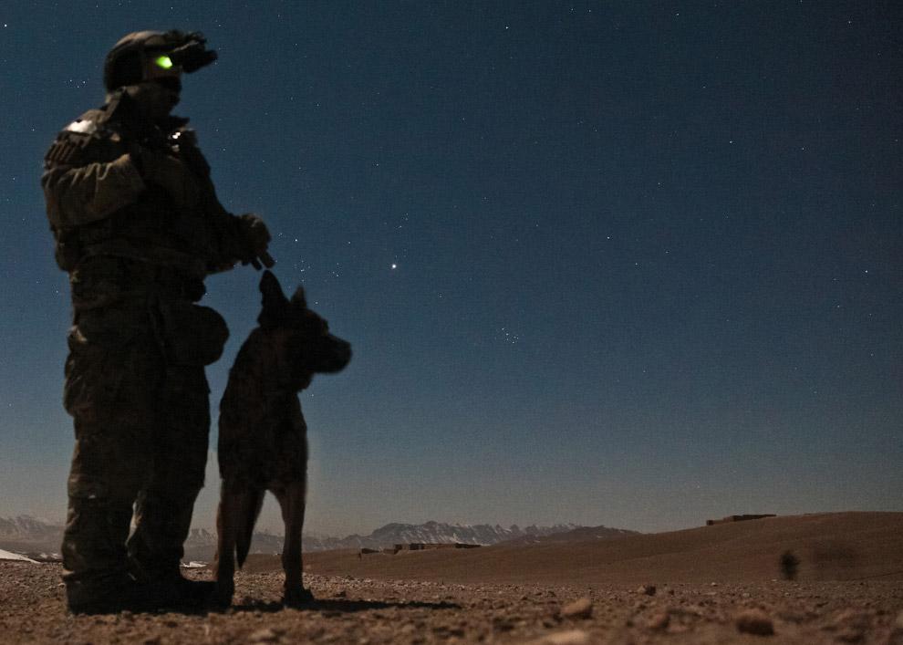 Собачья работа в Афганистане