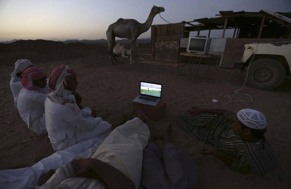 Просмотр матча Нидерланды-Австралия на верблюжьем рынке в Саудовской Аравии