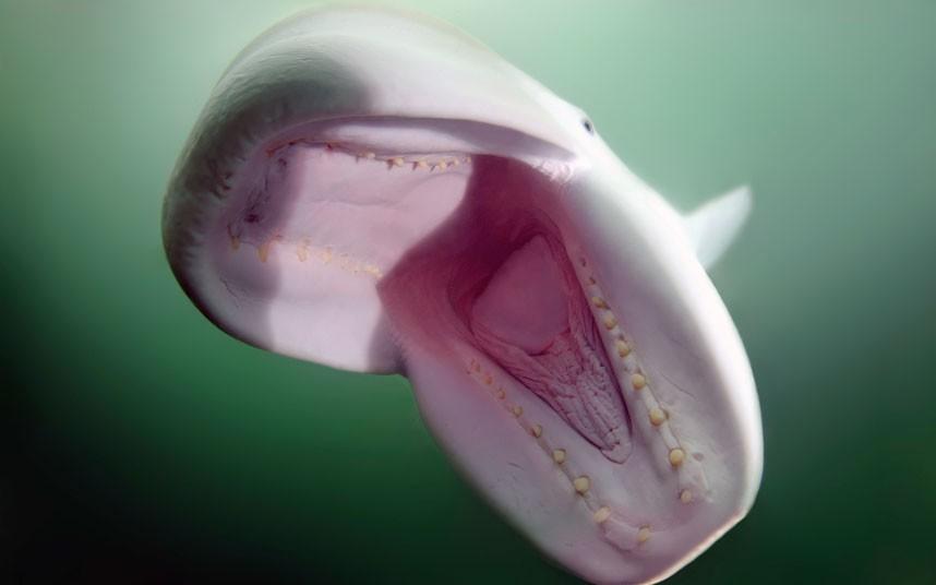 Добродушный дельфин