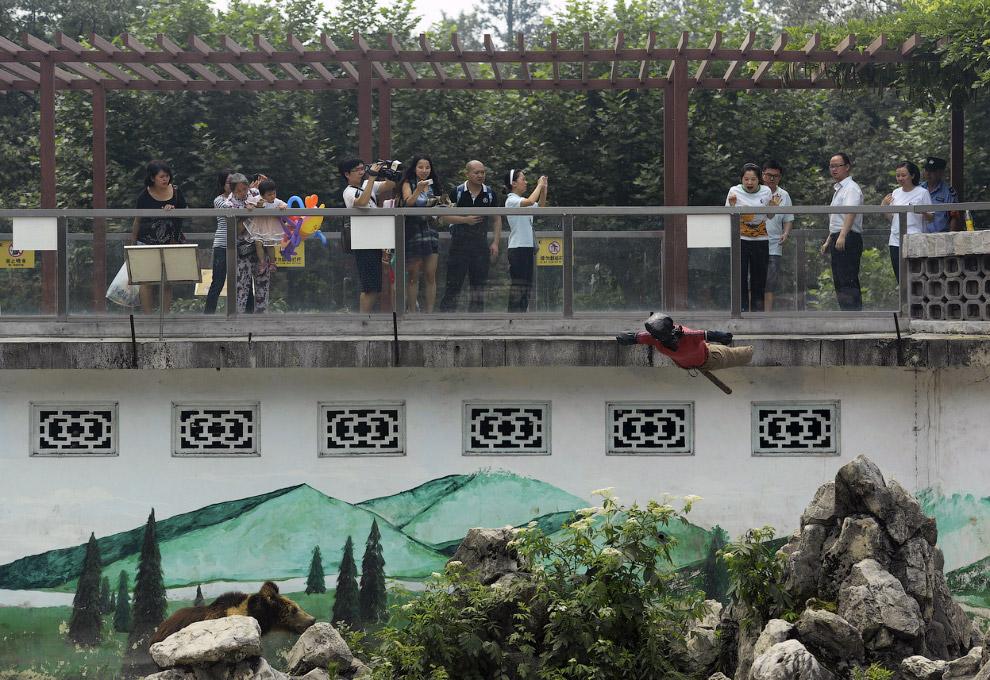 Посетителям демонстрируют, что бывает, если упасть в вольер с медведями