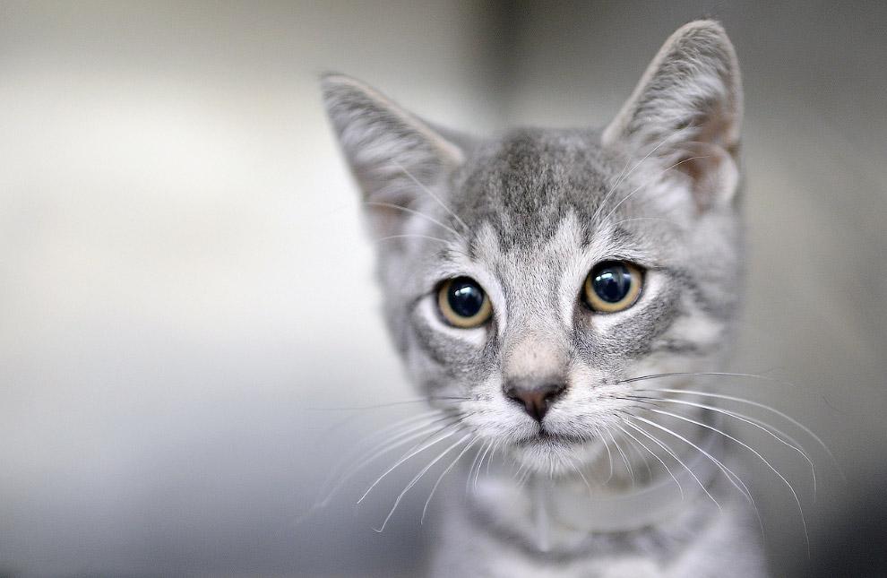 Невеселый кот на нью-йоркском мероприятии, посвященному животным