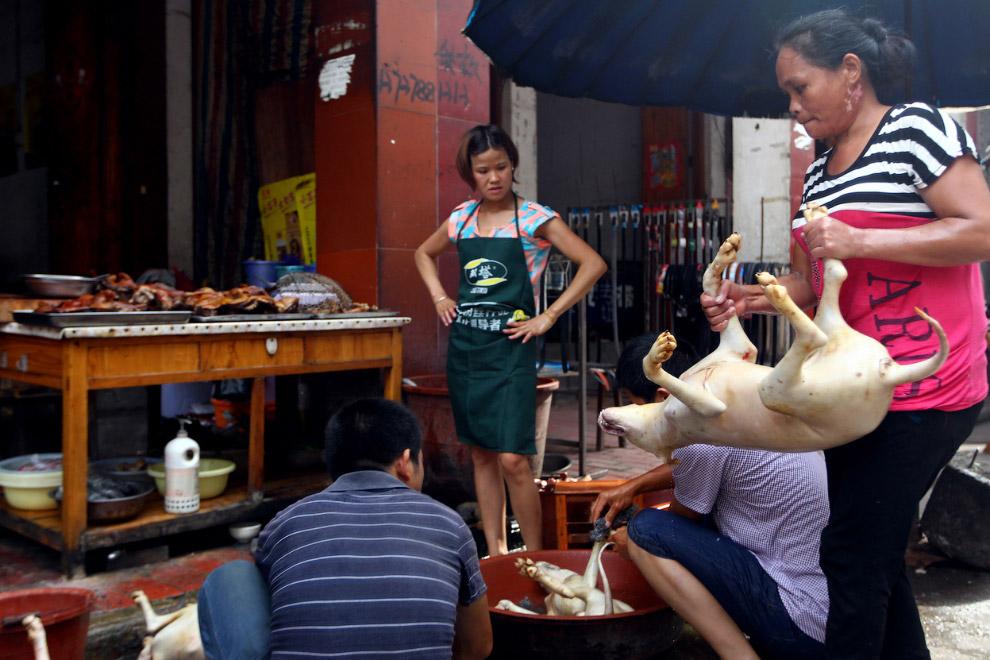 По разным оценкам, в Китае ежегодно съедается около 10 миллионов собак