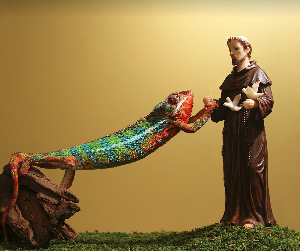 Святой Франциск и хамелеон