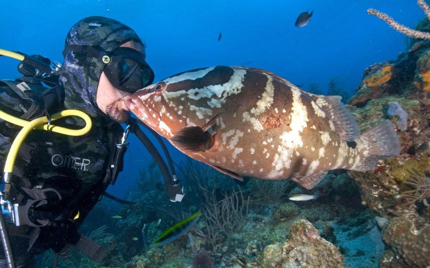 Фотограф поймал интересный момент, как большая рыба окунь выскочила из своей подводной норы и подплыла к водолазу