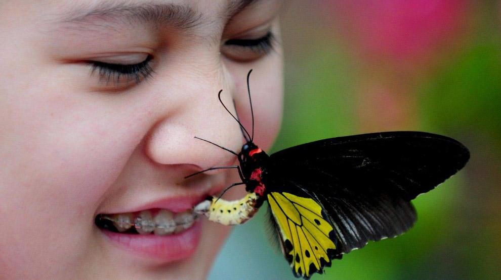 В долине бабочек в Шэньян на северо-востоке Китая в провинции Ляонин