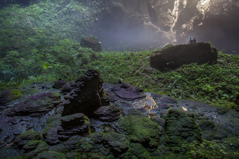 Здесь есть свои джунгли