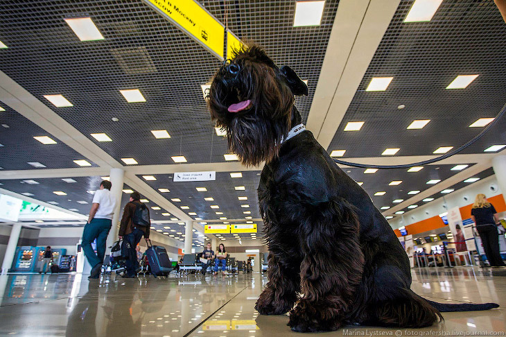 Познавательно: перевозка животных в самолете