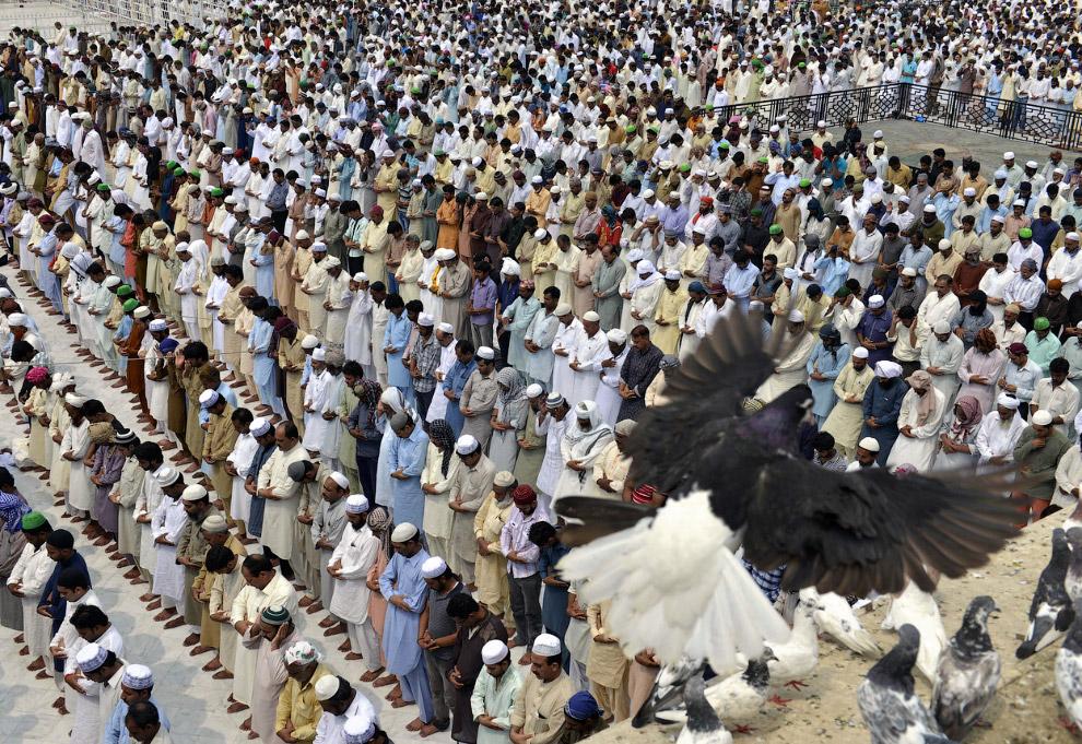 Пятничная молитва и голубь в Лахоре