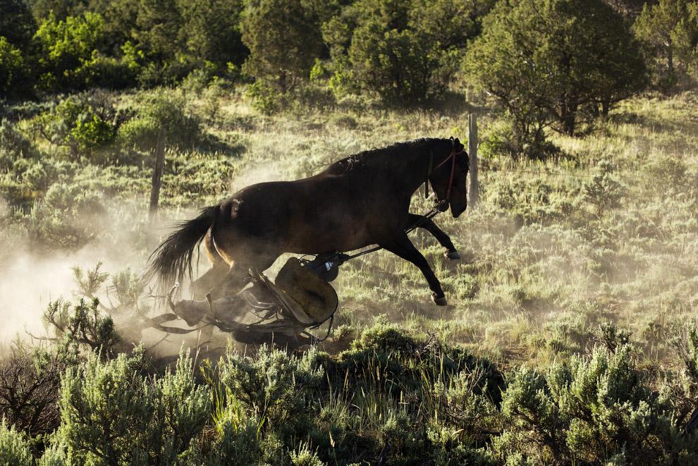 Настоящее ранчо