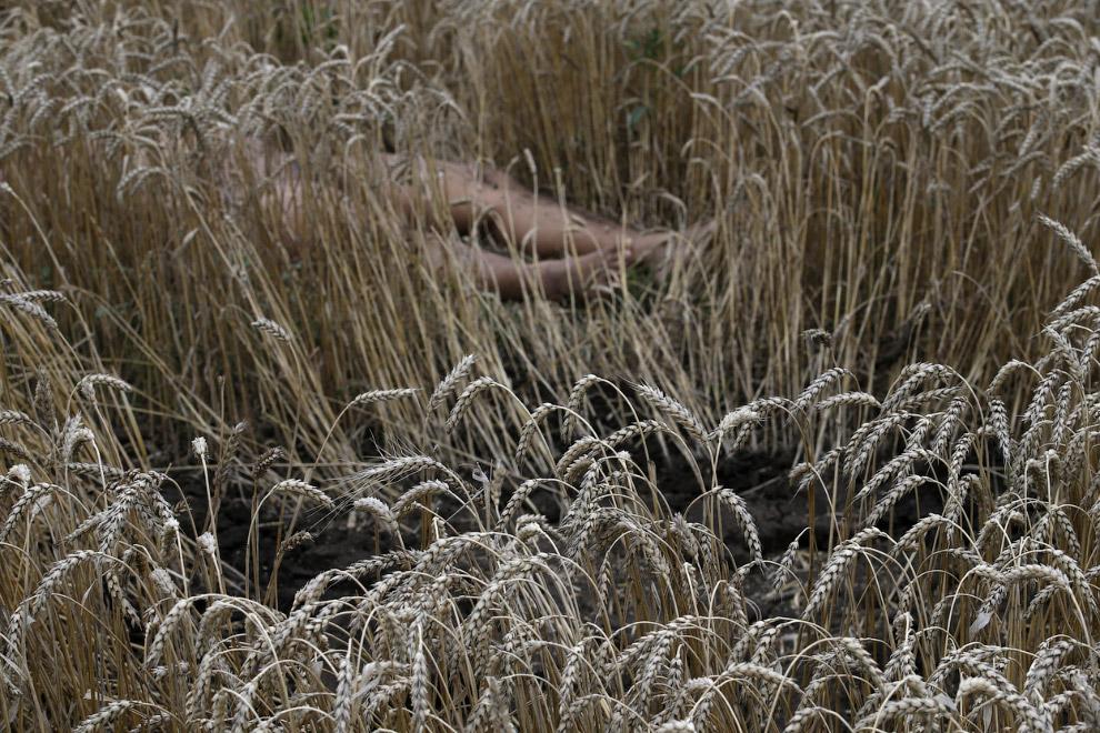 Тело погибшего в пшеничном поле