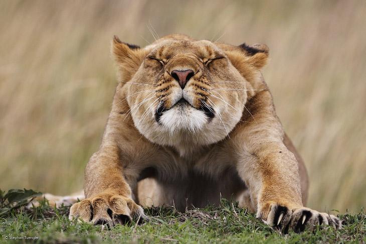 Конкурс фотографий дикой природы 2014