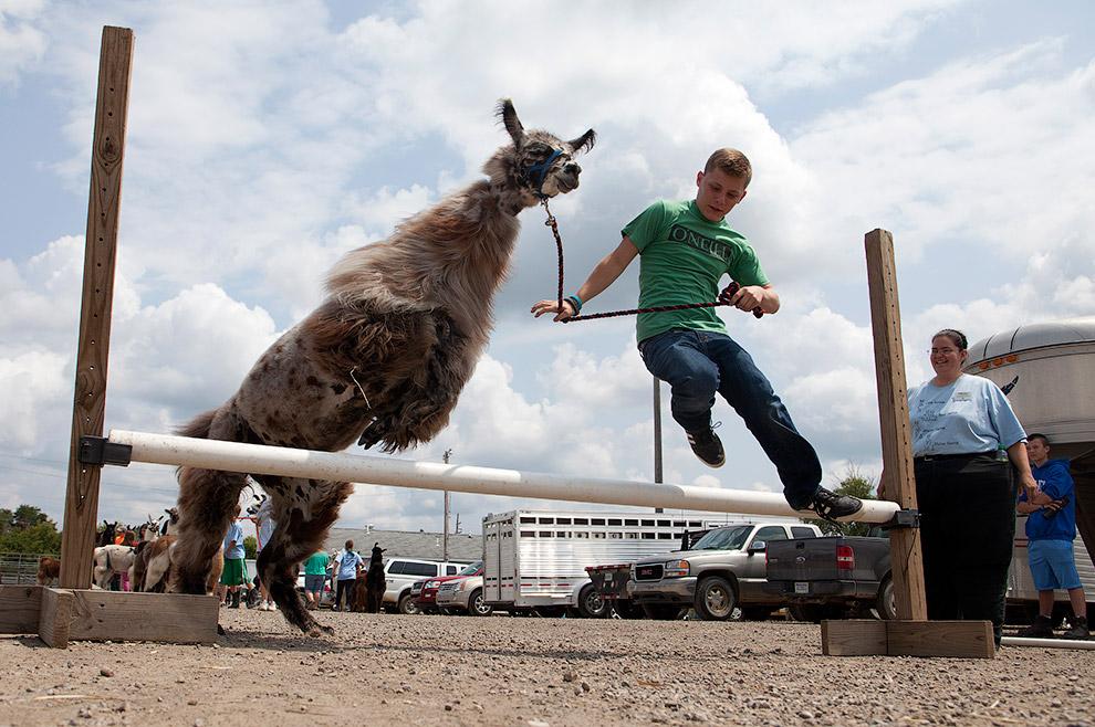 Прыжки с ламой в высоту