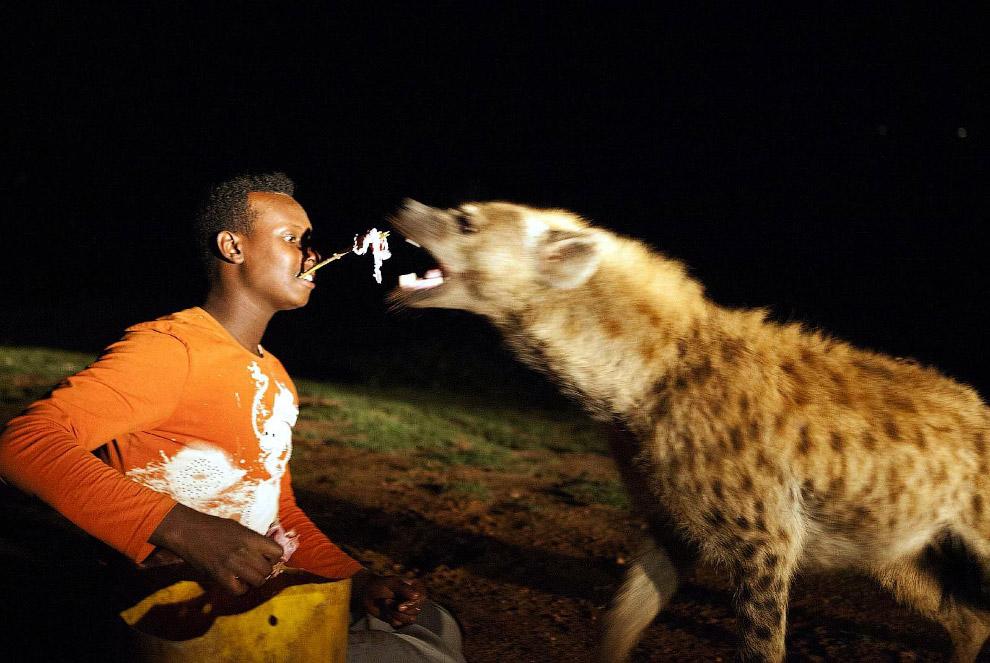 Шоу для туристов в Эфиопии – кормление гиены