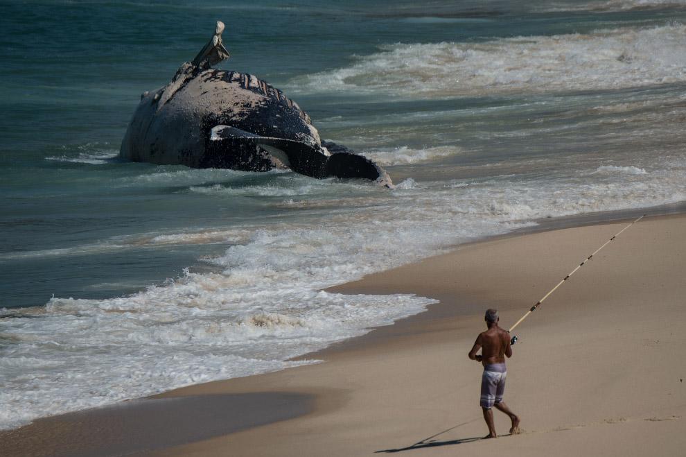 Рыбак и тело горбатого кита, которого выбросило на берег в Рио-де-Жанейро, Бразилия