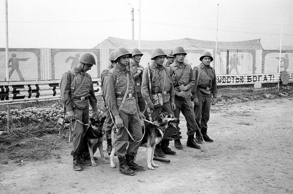 Советские солдаты с немецкими овчарками, обученными находить мины