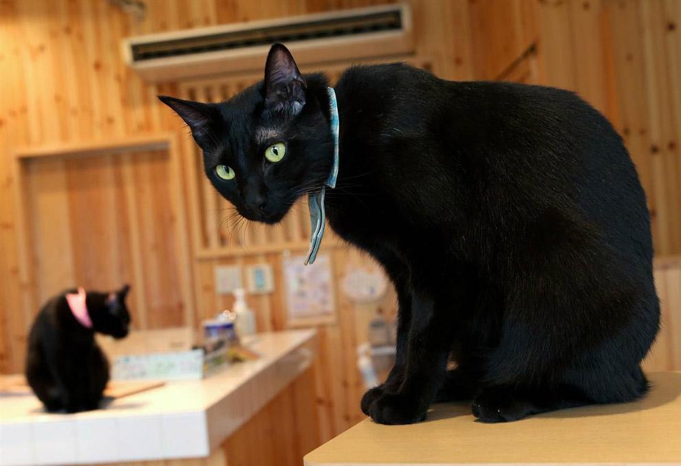 Королевство черных кошек