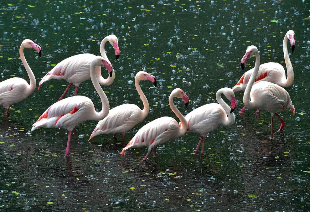 Сказочные фламинго