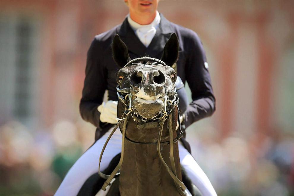 Конь в мыле. Соревнования в Висбадене, Германия