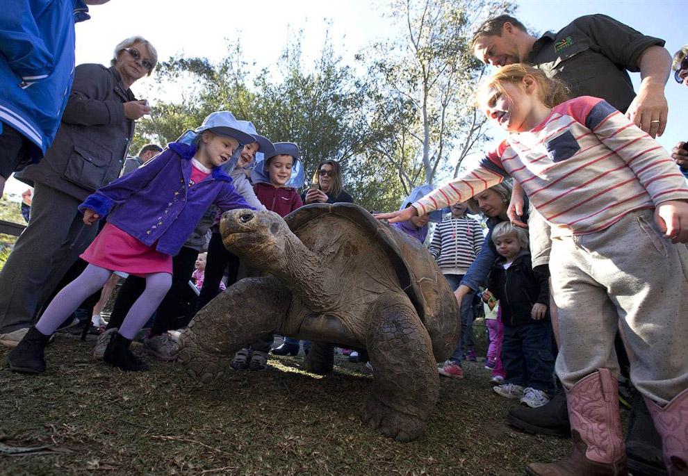 Гюго — 63-летняя галапагосская черепаха