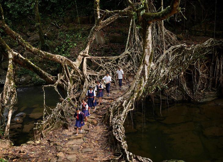 Мегхалая — самое влажное место на Земле