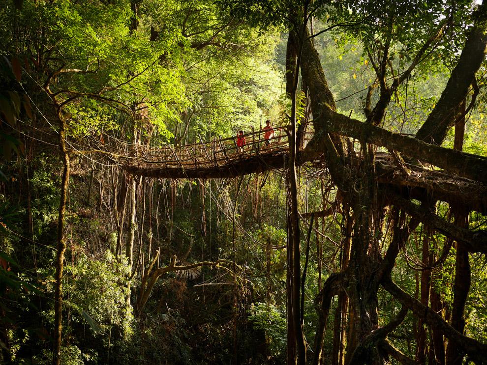 Мост состоит из бамбукового каркаса, который обвязывают корнями каучуковых деревьев