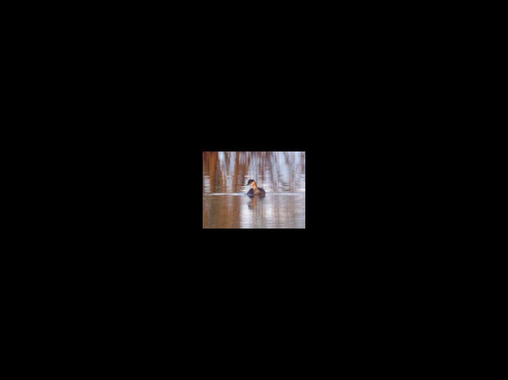 Единственная маленькая фотография карликовая поганки, сделанная в природе