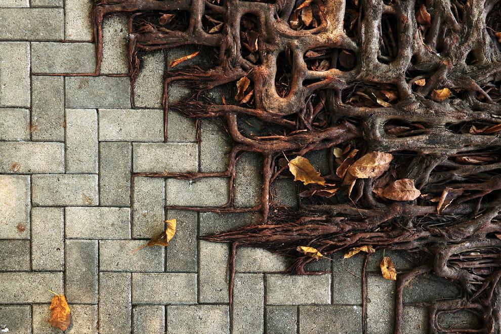 Борьба дерева и бетона