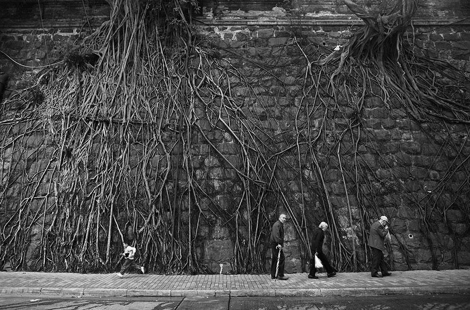 Деревья и корни на вертикальных стенах