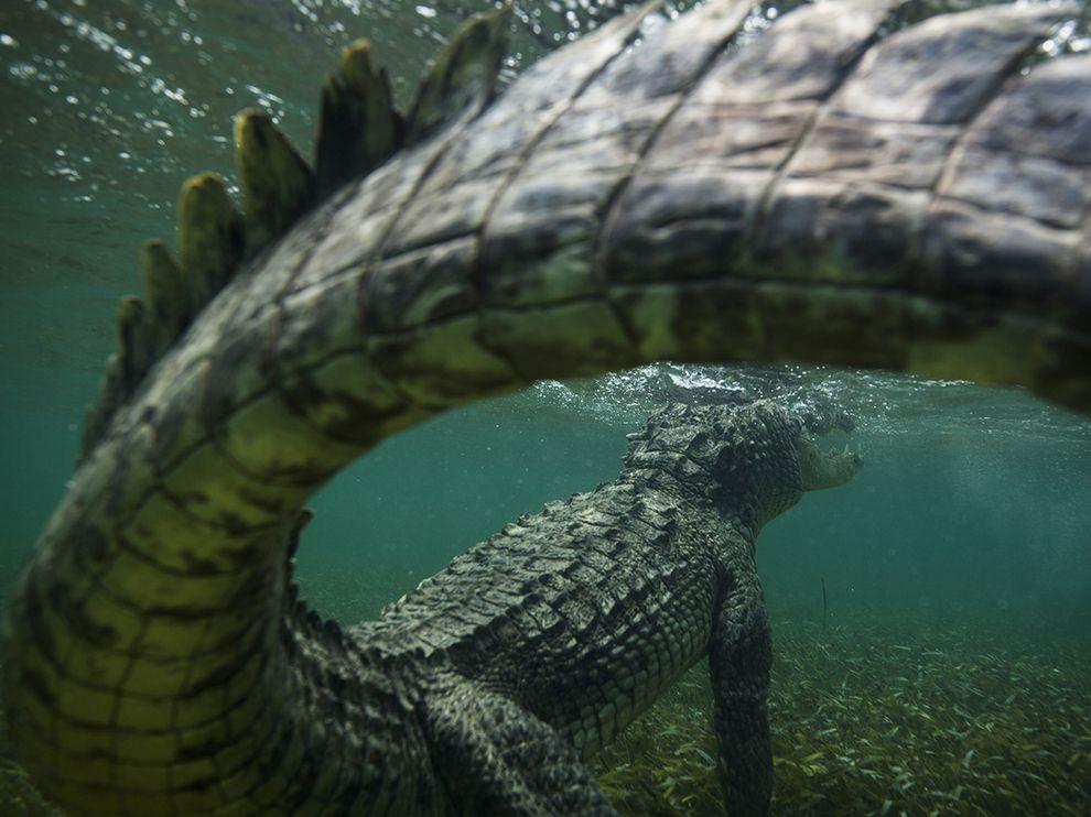 Настоящий динозавр под водой