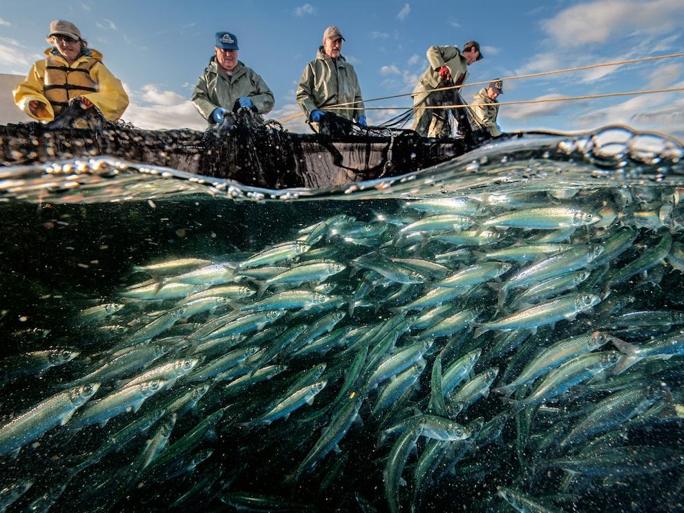 Рыбаки, Канада
