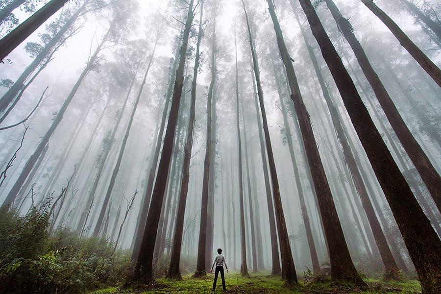 Лес, Австралия