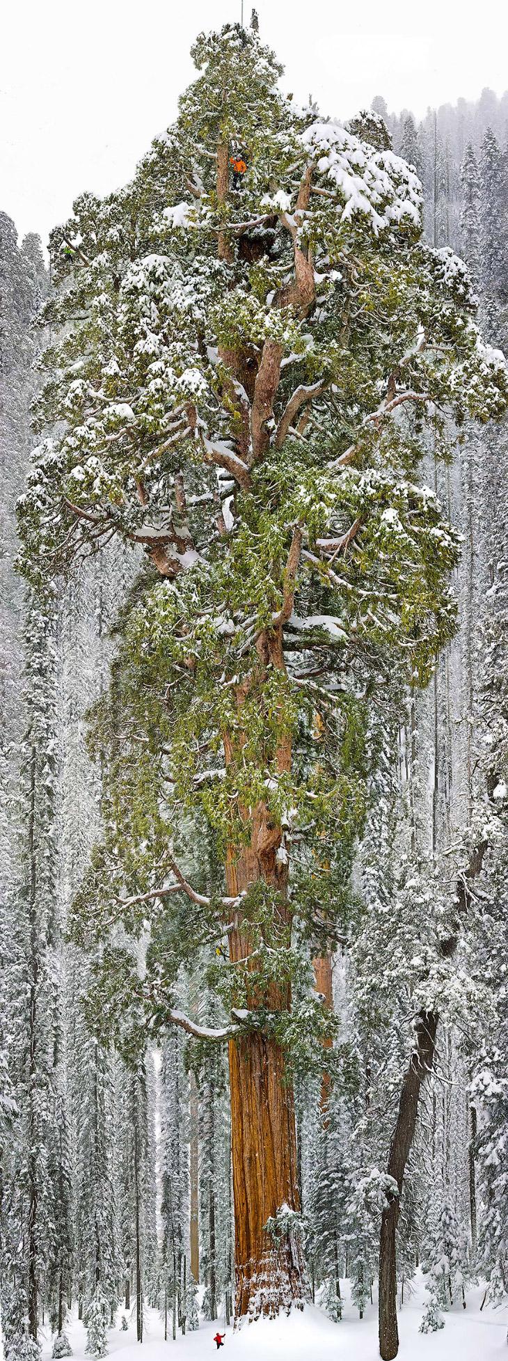 Найди людей на дереве. Их здесь трое