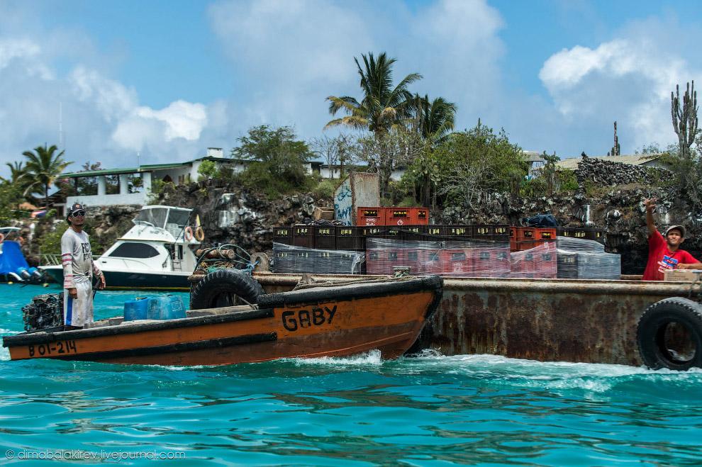 Галапагосы. Остров Санта-Фе