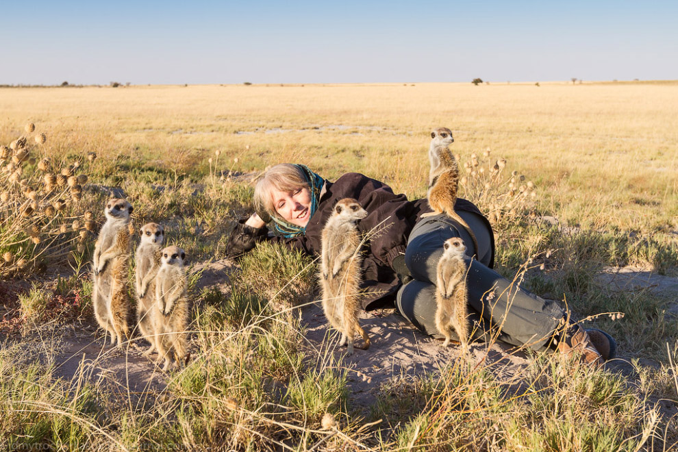 Африканские котики